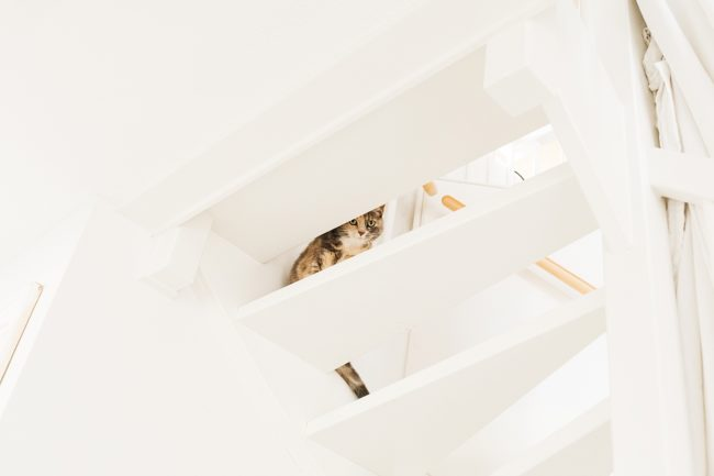 kat op de trap