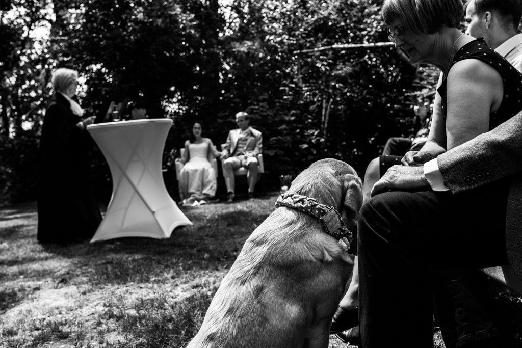 hond kijkt naar bruidspaar